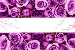 granica Piękna świeża słodka błękit róża dla miłości romantycznej doliny Zdjęcia Royalty Free