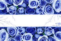 granica Piękna świeża słodka błękit róża dla miłości romantycznej doliny Zdjęcie Royalty Free