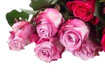 Granica różowi kwiaty Fotografia Royalty Free