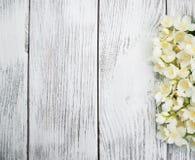 Granica z jaśminowymi kwiatami Obraz Royalty Free