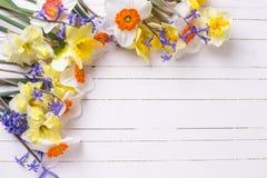 Graniczy od koloru żółtego, pomarańcze i błękita wiosny kwiatów na białym pa, Zdjęcia Stock