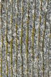 Graniet en mos. Stock Fotografie