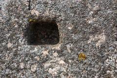 Granietoppervlakte met mos wordt overwoekerd dat Royalty-vrije Stock Afbeeldingen