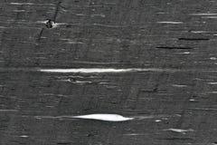 Granire naturale grigio di lusso, fondo astratto Immagini Stock