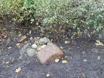 Granitów kamienie w jesieni miasta flowerbed Obraz Royalty Free