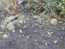 Granitów kamienie w jesieni miasta flowerbed Zdjęcia Royalty Free