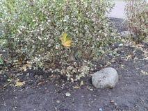 Granitów kamienie w jesieni miasta flowerbed Obraz Stock