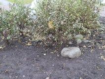 Granitów kamienie w jesieni miasta flowerbed Zdjęcie Stock