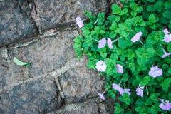 Granit & buske Arkivfoto