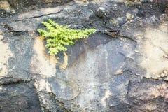 Granit extérieur abstrait en pierre sans couture gris de conception Photos libres de droits