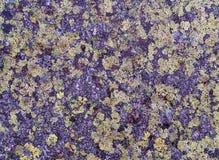 Granit i Fichtelgebirgen som täckas med laven Royaltyfria Bilder
