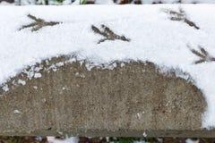 Granit z odciskami stopy od ptaka w śniegu Fotografia Royalty Free