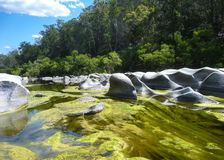 Granite and algae in river Stock Photography