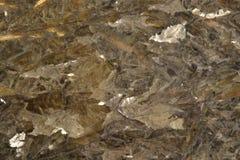 Granite Stock Photography