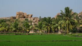 Granite boulder, rice fields and palms Stock Photo