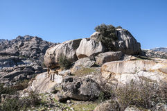 Granite boulders Royalty Free Stock Photography