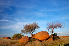 Granite boulders and trees, Namibia Stock Images