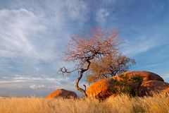 Granite boulders and trees, Namibia. Landscape with granite boulders, trees and blue sky, Namibia, southern Africa royalty free stock image