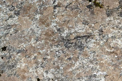 Granite brown and white Royalty Free Stock Photography