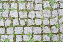 Granite cobblestones with grass Stock Photos