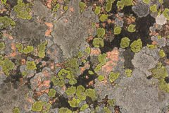 Granite covered with colorful lichen Royalty Free Stock Image