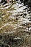 Granite Dells. Plant life at Granite Dells trails in Prescott, Arizona Stock Images