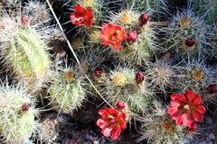 Granite Dells. Plant life at Granite Dells trails in Prescott, Arizona Stock Photos