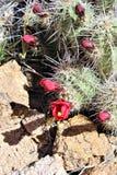 Granite Dells. Plant life at Granite Dells trails in Prescott, Arizona Royalty Free Stock Photography