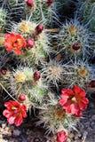 Granite Dells. Plant life at Granite Dells trails in Prescott, Arizona Royalty Free Stock Photo
