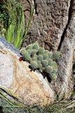 Granite Dells. Plant life at Granite Dells trails in Prescott, Arizona Stock Photography
