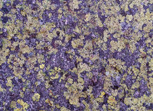Granite in the Fichtelgebirge covered with lichen. Royalty Free Stock Images