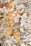 Granite mossy Royalty Free Stock Photo