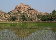 Granite mountain and rice fields Royalty Free Stock Photography