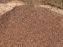 Granite pebble mound ants nest Stock Photo