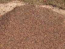 Granite pebble mound ants nest Stock Photo