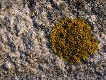 Granite rock with mold. Granite with its natural molds that embellish it stock image