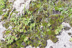 Granite rock with moss background. Background of stone surface. Textured processing hard stone. Royalty Free Stock Photo