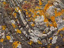 Granite rock texture with lichen Stock Photography