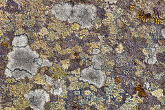 Granite rocks covered with lichen Stock Photos