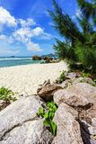 Granite rocks in white sand and turquoise water at tropical beac Royalty Free Stock Photo