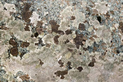 Granite spotted brown and pink Stock Photography