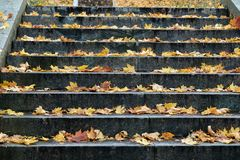 Granite stairs with fallen maple leaves in Autumn Pulkovo Astronomical Observatory park. Granite stairs with fallen maple leaves in Autumn park. This staircase royalty free stock photography