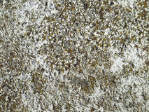 Granite stone macro texture Stock Photography
