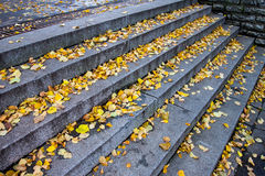 Granite stone stairs with leafs Royalty Free Stock Image