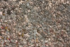 Granite surface overgrown with moss Royalty Free Stock Photography