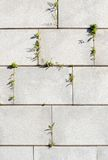 Granite wall. Granite slabs on fortified wall with ferns Stock Photography