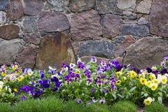 Granite wall and pansies Royalty Free Stock Image