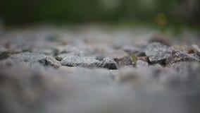 Granitowy żwir zbiory