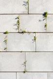 granitvägg Arkivbild