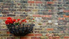 Géranium décorant le mur Photos libres de droits